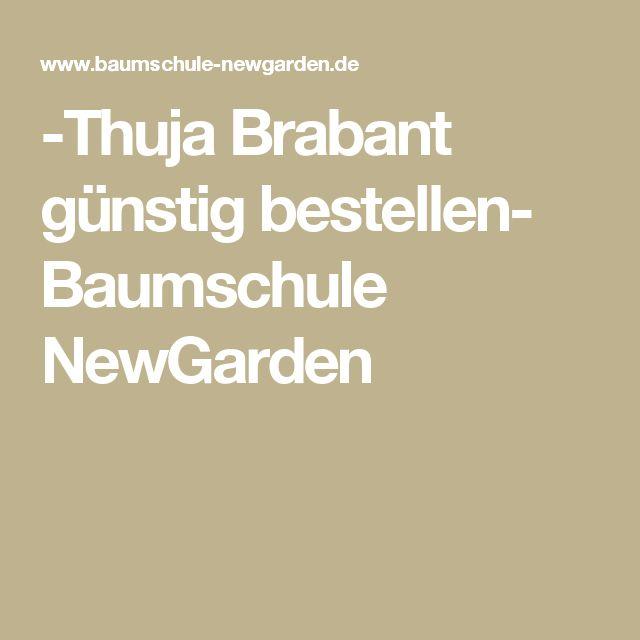 -Thuja Brabant günstig bestellen- Baumschule NewGarden