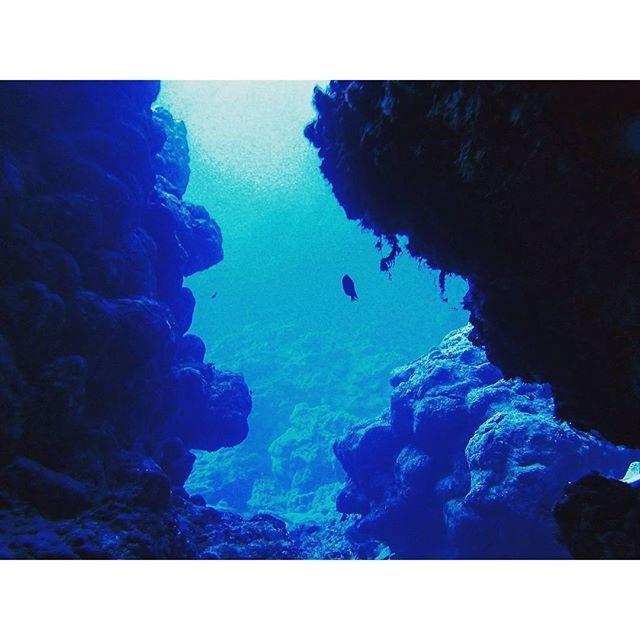 【sadanarishozo】さんのInstagramをピンしています。 《Good morning!誰しも海に何かしらの思い出あるかと思います。久米島は私に「夢を持ち、行動すること」の大切さを教えてくれた海です♪そんな思い出深い久米島の海です( ´∀`) #diving #divingtrip #ダイビング#divermag #水中写真#久米島#kumejima #沖縄#okinawa #underwater #uwphotography #underwaterphoto #blueworld #海#sea#ocean #marine #memory #landscape #絶景#beautiful #awesome #爽快#goodmorning #cave #洞窟#青い海#instatravel #instatrip#explore》