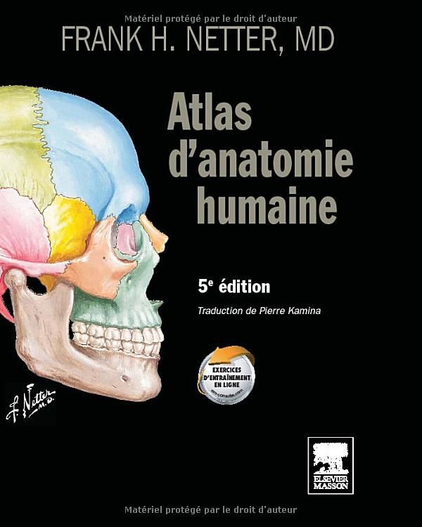 Atlas d'anatomie humaine - Frank Netter (https://pinterest.com/pin/287386019946410161).