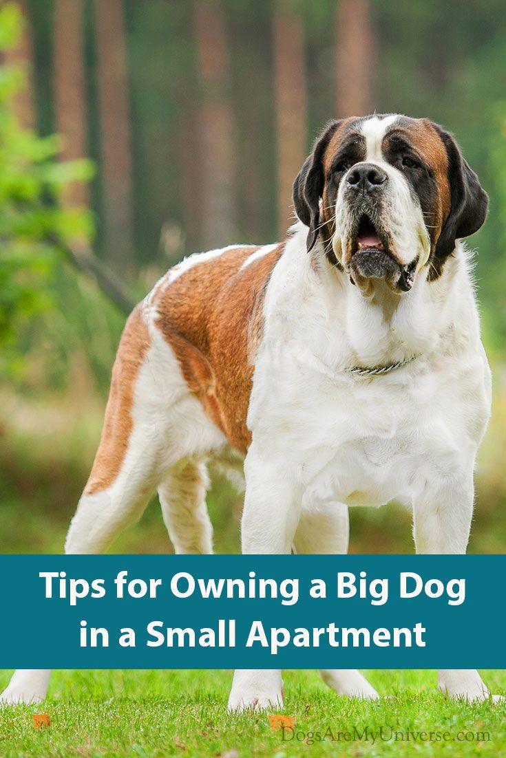 Owning A Large Dog Big Dog Breeds Best Big Dogs Dog Breeds Medium