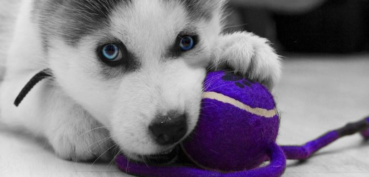 Día Mundial del Perro #NationalDogDay - http://www.mundoperros.es/dia-mundial-del-perro-nationaldogday/