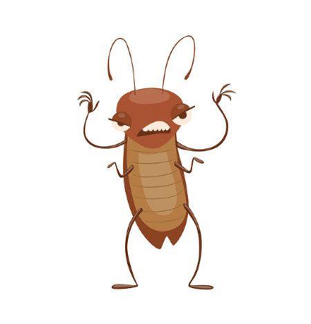 全国に分布するワモンゴキブリは雌だけで3匹以上いると、雄と交尾せずに子孫を残す「単為生殖」が促進されるとする実験結果を、北海道大の研究チームが13日発表した。単為生殖できる他のゴキブリも同様の性質をもっている可能性がある。動物学専門誌に掲載された。