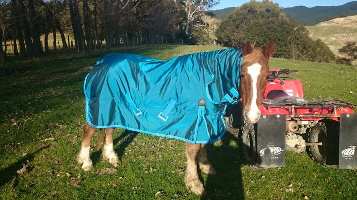 Old fella all set for the winter with his new shires cover