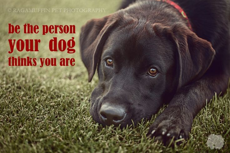 be the person your dog thinks you are - Yahoo! Search Results
