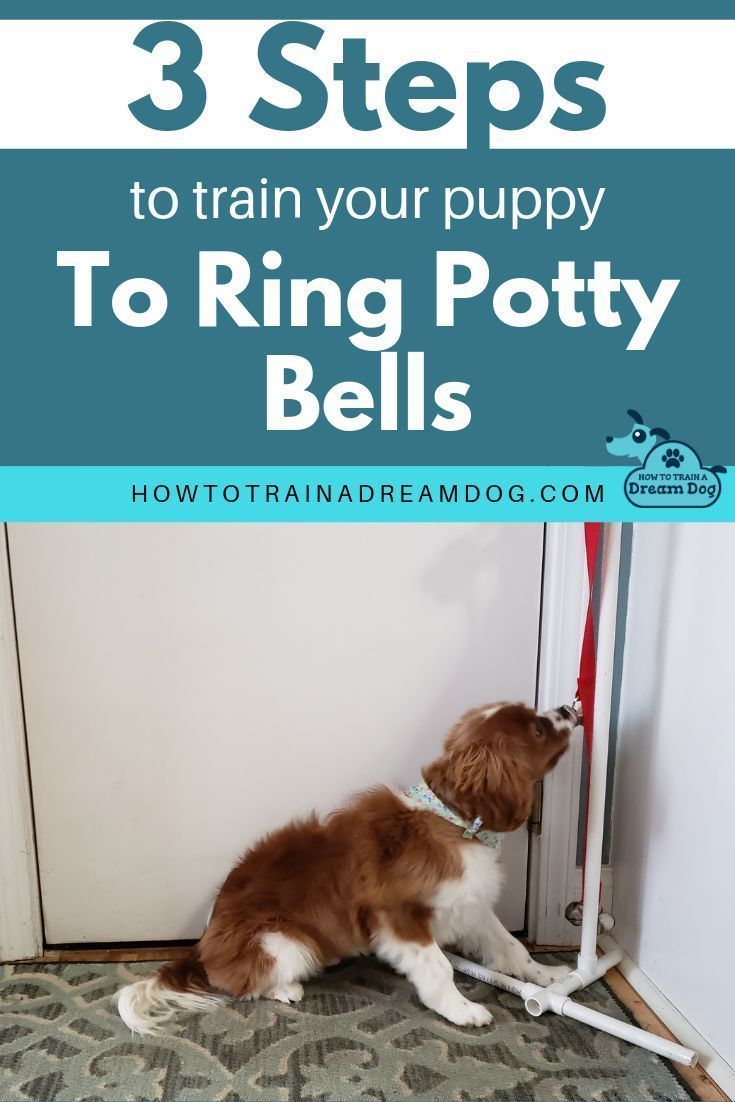 3 Steps To Train Your Puppy To Ring Potty Bells How To Train A Dream Dog In 2020 Training Your Puppy Potty Training Puppy Potty Bells