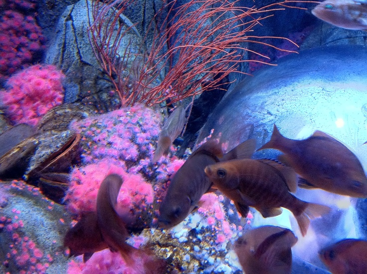 33 best    aquariums     images on pinterest fish tanks san diego cabins for sale