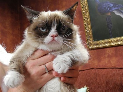 """The internet sensation who appears to have a permanent scowl on her face told her 878,000 fans on Facebook, """"They're making a movie about me? I already hate it."""" Typical Grumpy Cat. The mixed breed feline rose to fame last fall when her mom's brother posted a photo of her frowning face on Reddit. The photo received 1 million hits in 48 hours. #grumpy cat"""