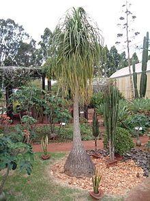 Monocotyledoneae - Wikipedia, la enciclopedia libre