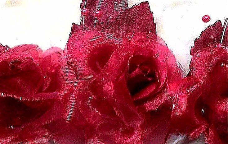 Bunga Mawar Taman Modern Hybrid Tea Rose Bunga Bunga Indah Mawar Cantik