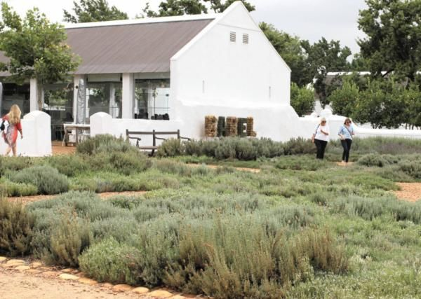 Pictures: Babyl's beautiful bounty - IOL Travel Western Cape | IOL.co.za