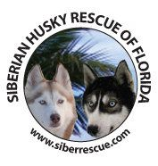 See our Florida rescue on Facebook: https://www.facebook.com/HuskyMomAtSiberianHuskyRescueOfFlorida