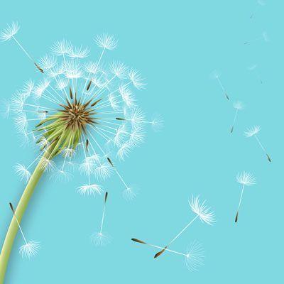 Alergiile sunt incurabile? Cum le tratăm naturist ? Cum combatem alergiile?