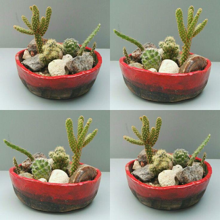 maceta cermica hecha a mano con diferentes cactus por ricardo stefani