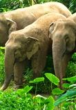 Read How to interact ethically with elephants in Thailand