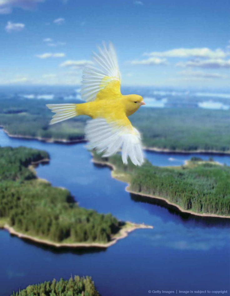 .Bird flying over landscape. Like my childhood dreams...