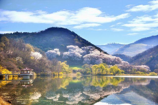 Musim Bungah di sebuah Waduk di Korea