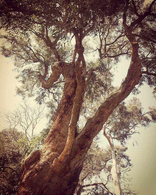Araluen Botanical Park, Perth.