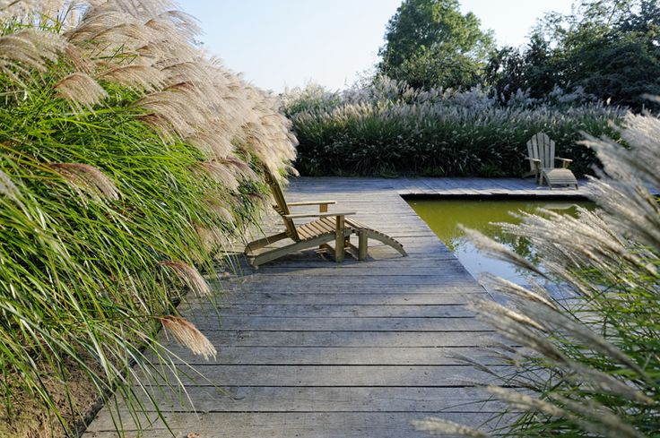 25 best ideas about miscanthus sinensis gracillimus on for Auzouville sur ry jardin plume