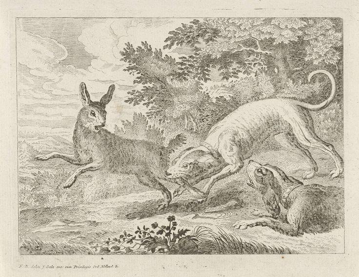 Jacob Gole | Jacht op een haas, Jacob Gole, 1680 - 1723 | Twee honden jagen op een haas. De prent maakt deel uit van een serie met verschillende dieren als onderwerp.
