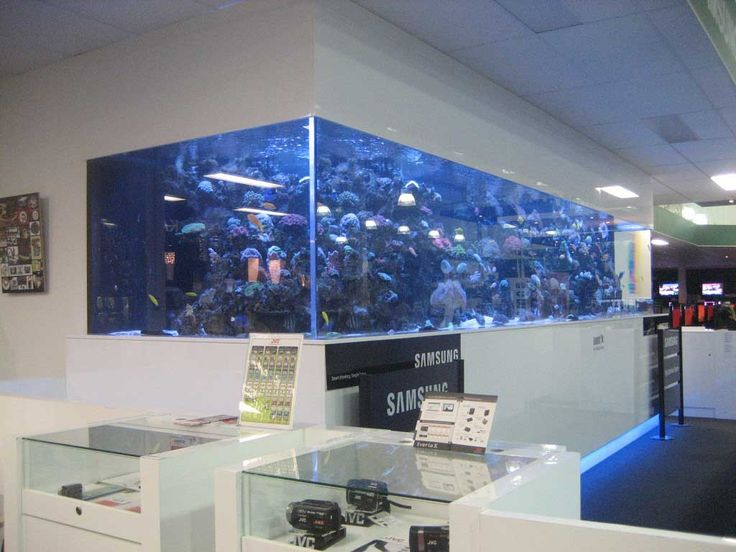 Large Size Saltwater Wall Mounted Aquarium In The Office