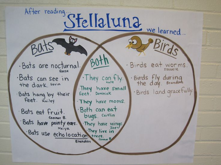 """Higher order thinking done after reading """"Stellaluna"""". Comparing and contrasting bats and birds."""
