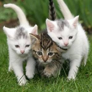 Ofiste başarının anahtarı yavru kedi resimleri