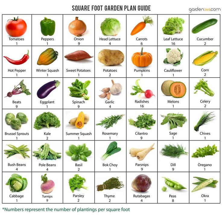 Square-Foot-Garden-Plan.jpg (925×900)