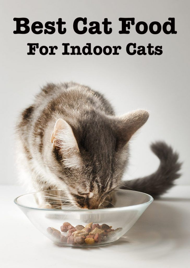 Best Cat Food For Indoor Cats Top Tips And Reviews Healthy Cat Food Indoor Cat Food Cat Nutrition