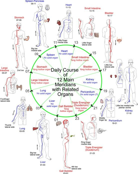 131 best tao reflexology images on pinterest acupressure daily course of 12 meridians with related organs ccuart Gallery