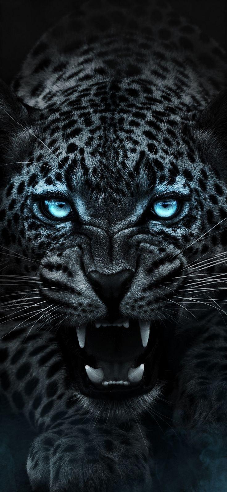 The Amazing Leopard Wild Animal Wallpaper Tiger Wallpaper Jaguar Animal