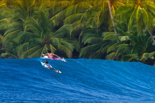 Palms and sea...