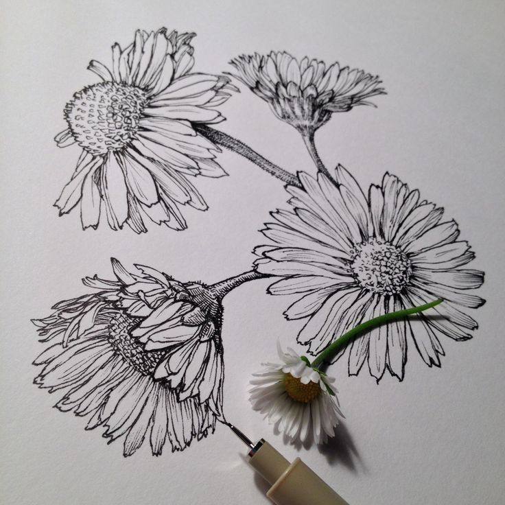25 best ideas about flower drawings on pinterest flower for Simple carnation drawing