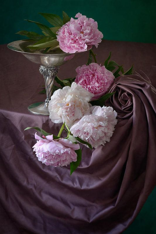 http://nikolay-panov.pixels.com/products/peonies-on-pink-nikolay-panov-art-print.html classic floral still life photography with lush bouquet of colorful peonies and vintage metal vase on folded pink drape in daylight in early summer