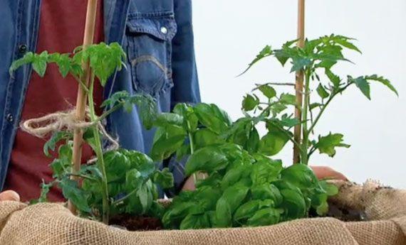 Orto in cassetta fai da te, come organizzare un orto in pochissimo spazio! | I sempreverdi