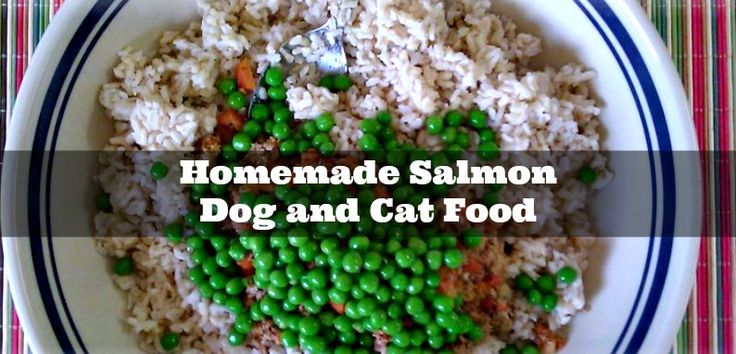 Homemade Salmon Dog and Cat Food - http://www.sofabfood.com/homemade-salmon-dog-and-cat-food/ Learn how to make Homemade Salmon Dog and Cat Food. Freeze portions and take out each morning for a very healthy breakfast for your pets. They'll love the flavor and you'll love that you're feeding them an all natural meal!  Homemade Salmon Dog and Cat Food Have you tried...