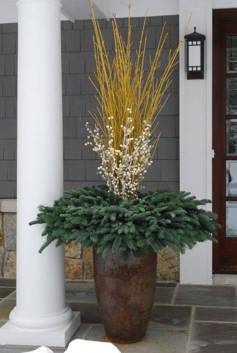 Yellow twig dogwood evergreen pot. This would be stunning by an entrance and would transition nicely from fall into winter.