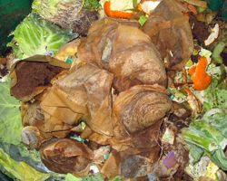 Learn how to make organic compost to enrich your soil.