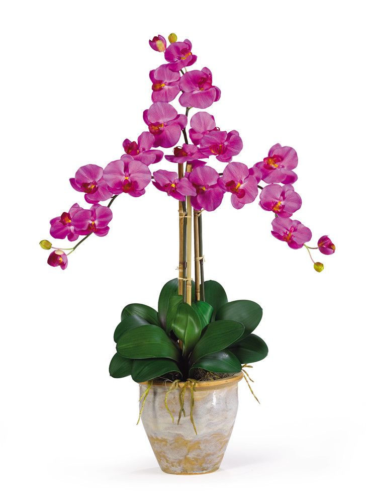 Features:  -Silk orchid arrangement.  -Three beautiful stems with 6 phalaenopsis orchid flowers and two buds.  -Lush green natural looking leaves.  -Stylish ceramic pot.  -Orchid color.  Product Type: