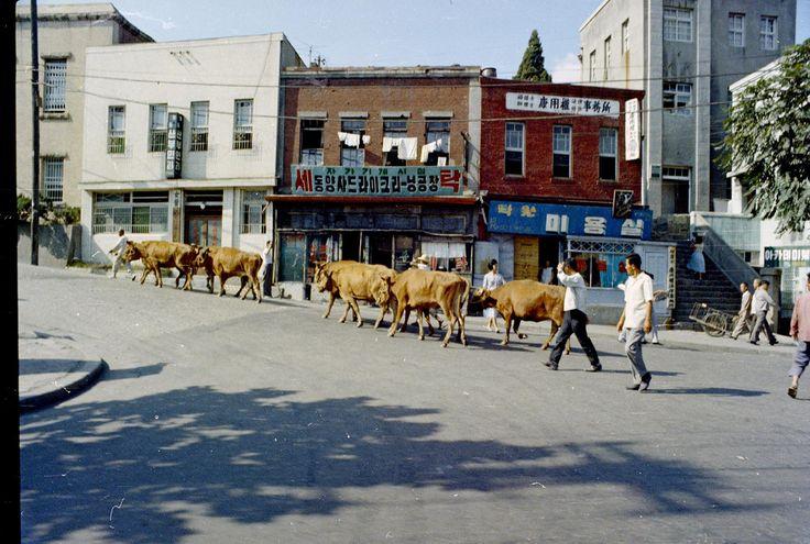 Cowboys, Seoul, Jun 1965 | Photo by Stephen Dreher.