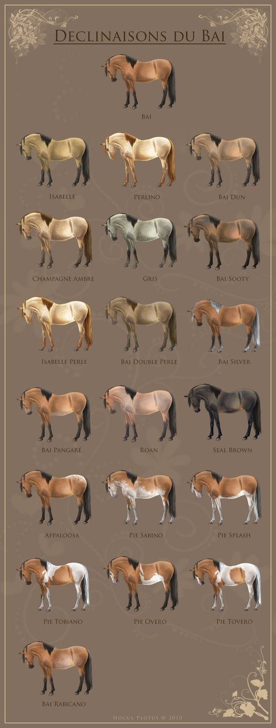 horse Color Chart by ~MagicWindsStables on deviantART
