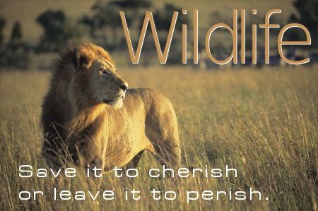Save wildlife