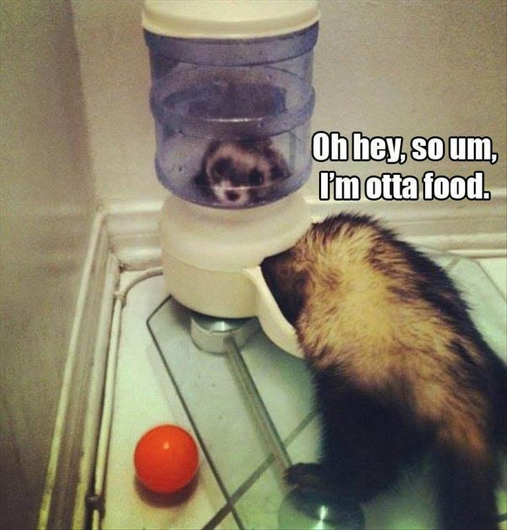 Funny Animal Picture Dump Of The Day