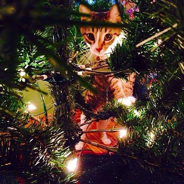 Pippy in the tree