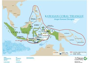 Coral Triangle Map 314 x 217