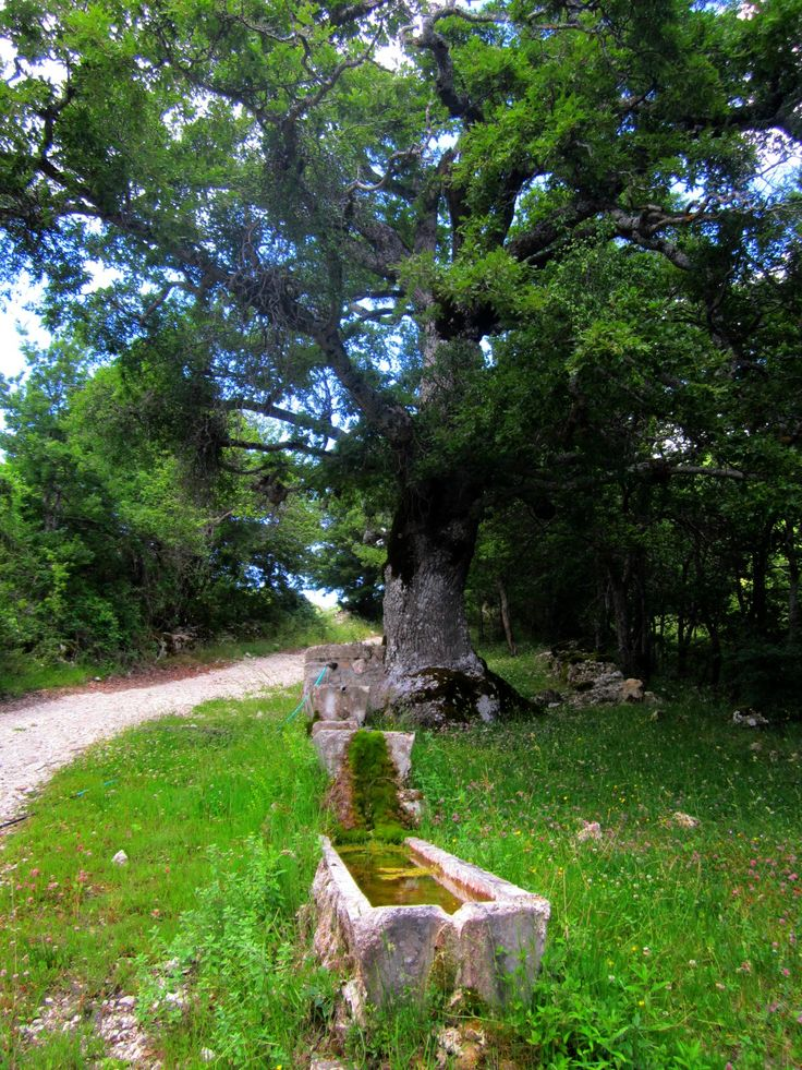 "Casale Caserta o Baiocco, ""Bocco"" - Monteleone di Spoleto. Watering place in the shade of an ancient oak.  Luoghi abbandonati - Abandoned places. Umbria"