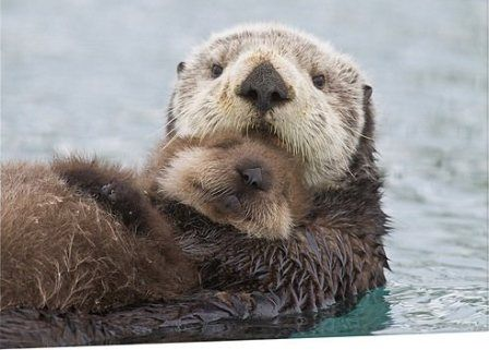Sea Otter Mom & Pup