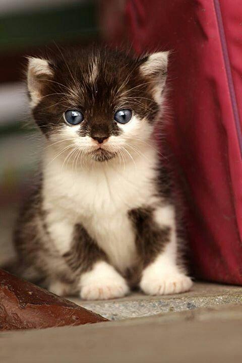 Gatito precioso