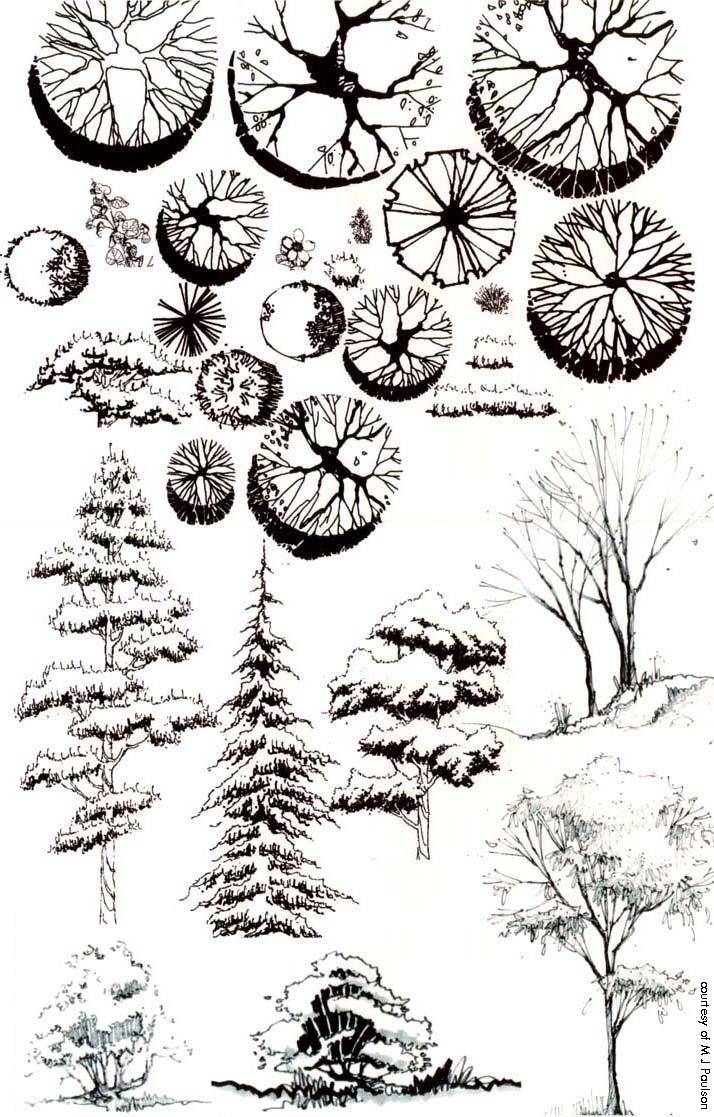 Landscape Architecture Plan Trees 89 best sketching plants images on pinterest | landscaping