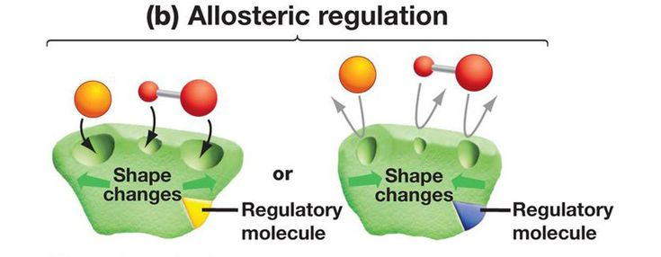 The allosteric regulation of proteins occurs when the regulators undergo binding at another site other than the usual one. Find more about it here