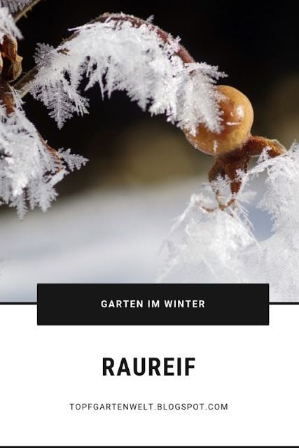 Raureif, Garten, Natur, Bilder, Fotografie, Makro, Winter, Dekoration, Schnee, F